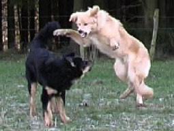 rücken seitlich drehen hund