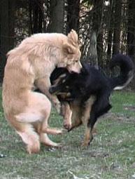 warnung vor dem hunde oder hund
