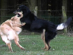 erlerntes verhalten bei tieren