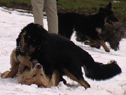 hund schreit vor angst