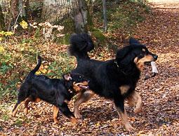 homöopathie mittel hunde stress