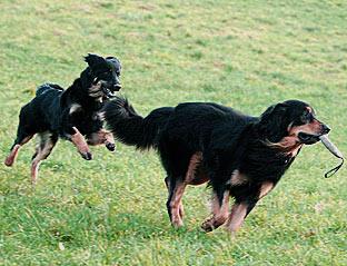 hund testet seine grenzen