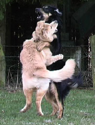 hund jagen unterbinden