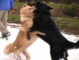 hund hört draussen nicht